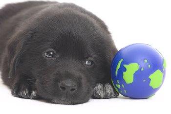 puppy-globe-796695