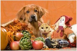 thanksgivingpets